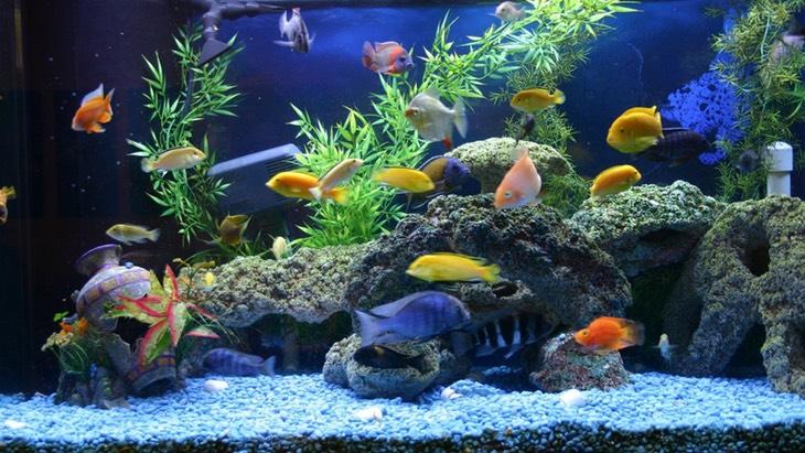 Домашние рыбки и аквариум для них